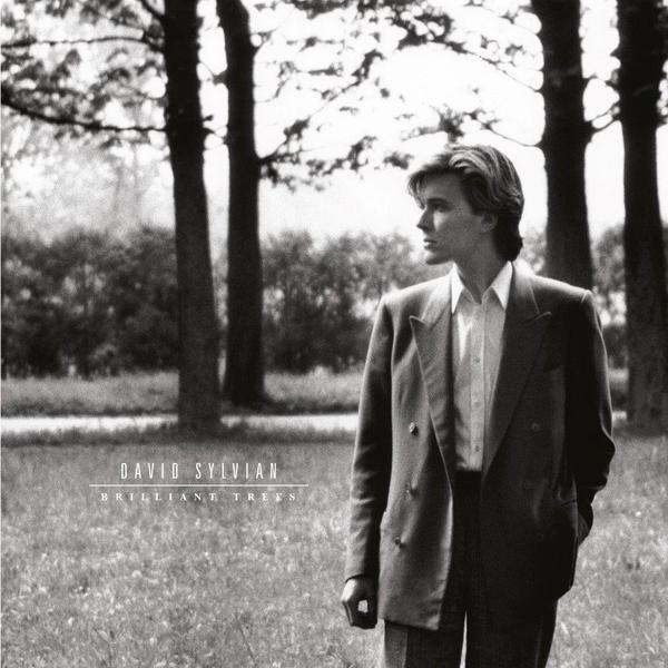 Sylvian brilliant trees