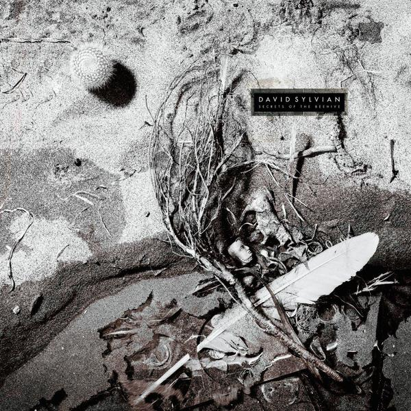 Sylvian secrets of the beehive