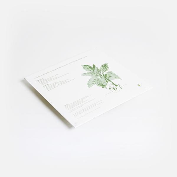 Plantasia green b
