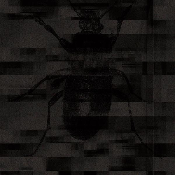669158525331 t10 image